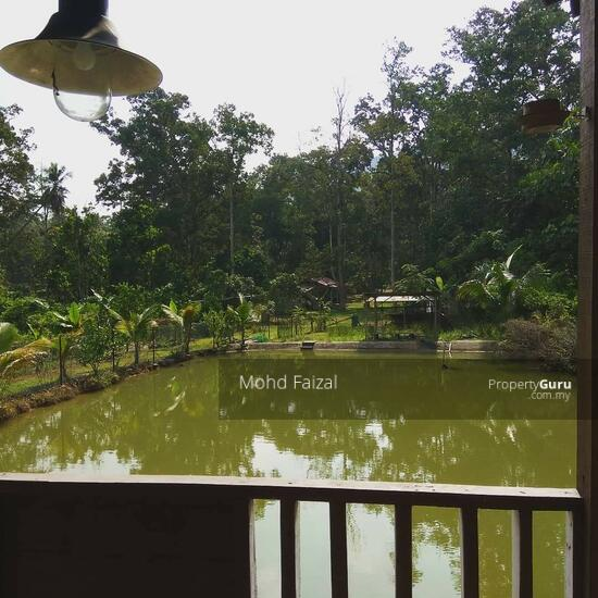 Tanah Pertanian 1.04Ekar Di Kampun Sg Mahang Nilai (Konsep Eco Resort)  133939082