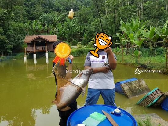 Tanah Pertanian 1.04Ekar Di Kampun Sg Mahang Nilai (Konsep Eco Resort)  133939085
