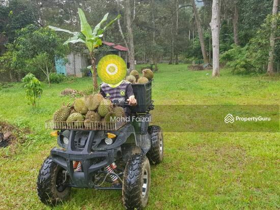 Tanah Pertanian 1.04Ekar Di Kampun Sg Mahang Nilai (Konsep Eco Resort)  133939088